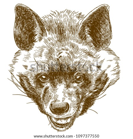 Vector antique engraving drawing illustration of hyena head isolated on white background