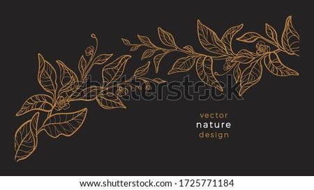 Vector art line nature. Floral plant, hand drawing graphic illustration. Botany tea branch, leaf, flower in bloom.