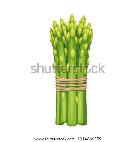 Vector asparagus. Vegetable illustration for farm market menu. Healthy food design Stock photo ©