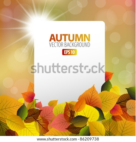 Vector autumn background with white card and sun in the background