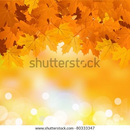 vector autumn leaves on a