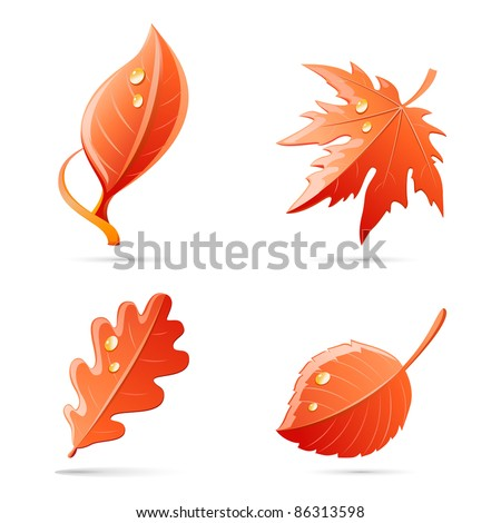 vector autumn leaves red set