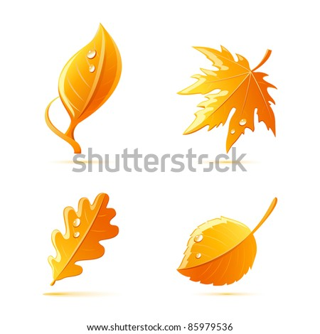 vector autumn leaves set