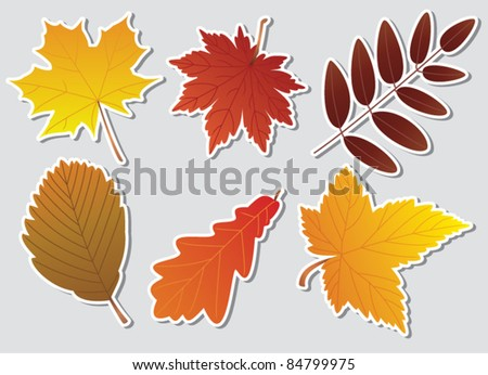 vector autumn leaves with white border
