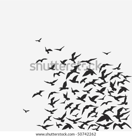Vector background of a birds flock
