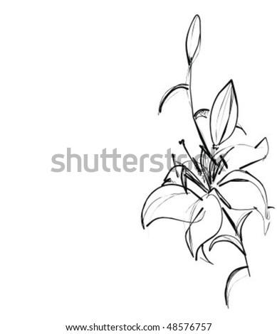 VECTOR Background with a lily