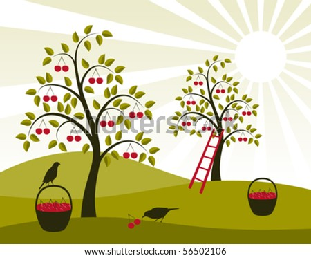 vector background with cherry trees and baskets of cherries