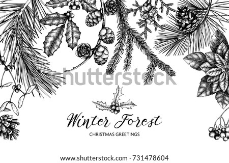 Vector background with hand drawn conifers, holly berries, mistletoe, cones, mountain ash. Holiday decor elements. Vintage Christmas or New Year card design. Winter template isolated on white