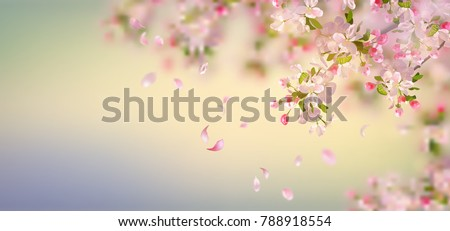 Vector background with spring apple blossom. Blossoming branch in springtime with falling petals