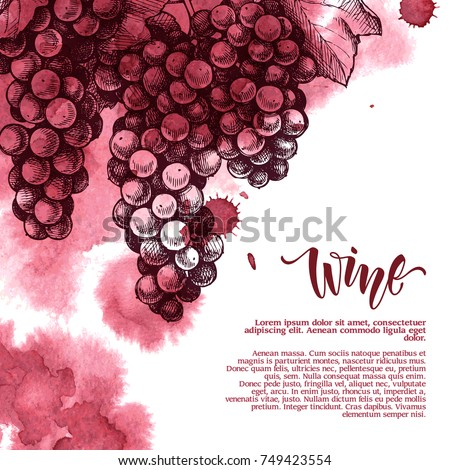 Vector background with wine stains and hand drawn sketch illustration of grapes.