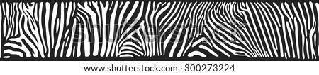 vector background with zebra