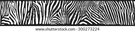 vector background with zebra