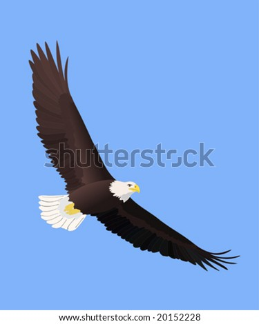 vector bald eagle soaring