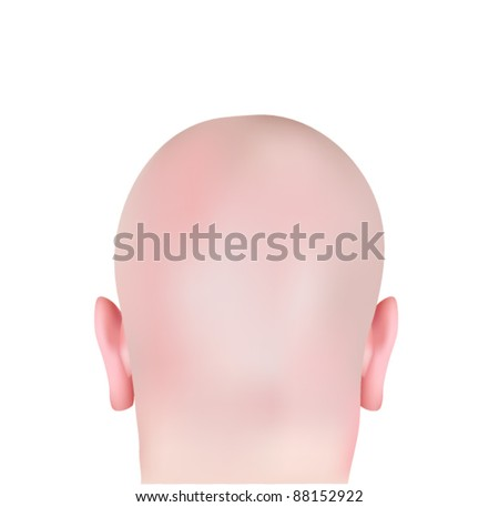 Vector Bald Head isolated on White