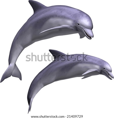 VECTOR: Beautiful dolphin leaping