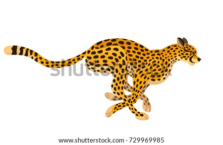 Vector beautiful running cheetah big wild cat animal, children alphabet illustration letter C