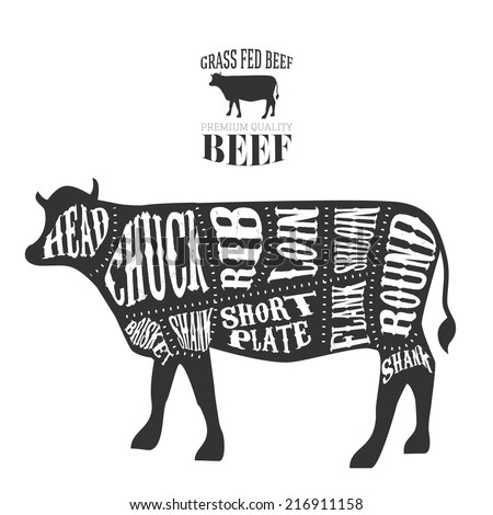 vector beef cuts diagram in...