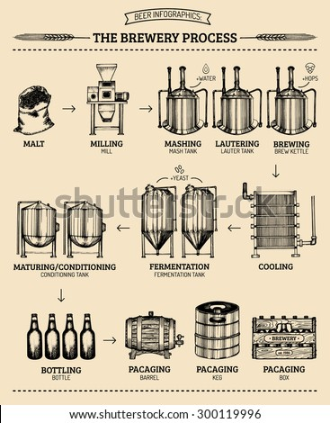 vector beer infographics with