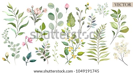 Vector Big Set botanic elements - wildflowers, herbs, leaf. collection garden and wild foliage, flowers, branches.  illustration isolated on white background, eucalyptus, exotic, tropical plants