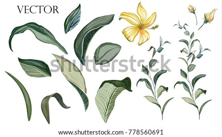 vector big set botanical