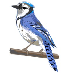 vector bird / blue bird / sketching bird