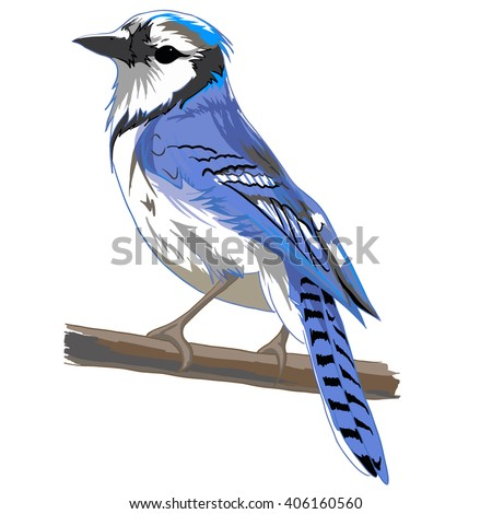 vector bird   blue bird