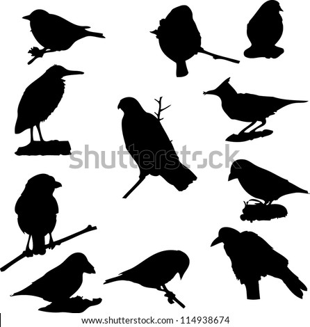 vector birds silhouette