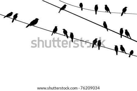 vector birds sitting on wire