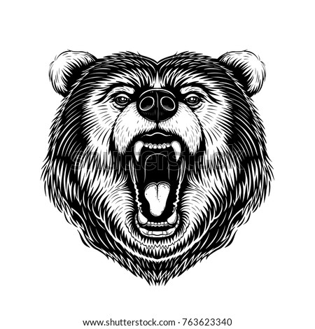 vector black and white bear
