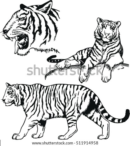 vector black and white bengal