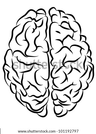 vector black and white brain contours