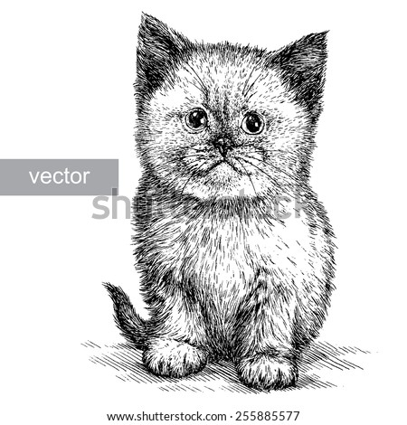 vector black and white cat