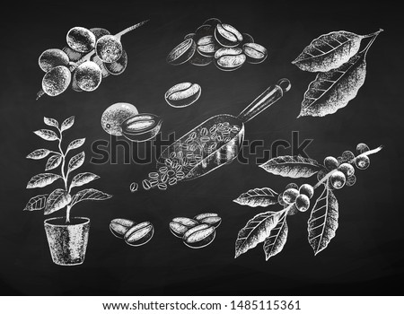 Vector black and white chalk drawn illustration set of coffee leaves and beans on chalkboard background.
