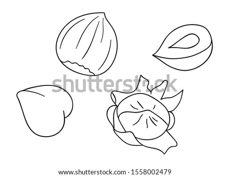 Vector black and white hazelnut icon. Set of isolated monochrome nuts. Food line drawing illustration in cartoon or doodle style isolated on white background Foto d'archivio ©