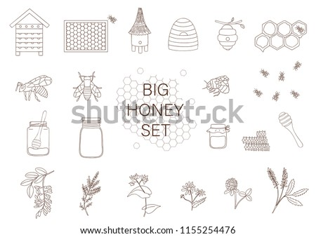 Vector Black And White Set Of Honey Bee Bumblebee Beehive Wasp