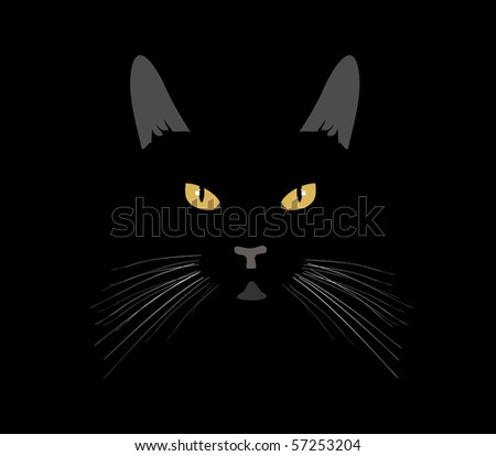 vector black cat in the night