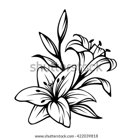 vector black contour of lily...