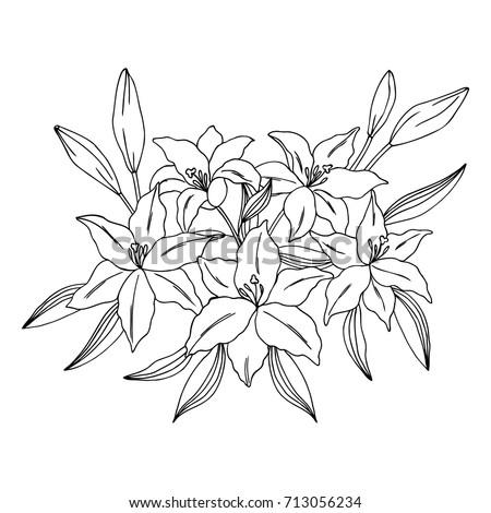 vector black white contour