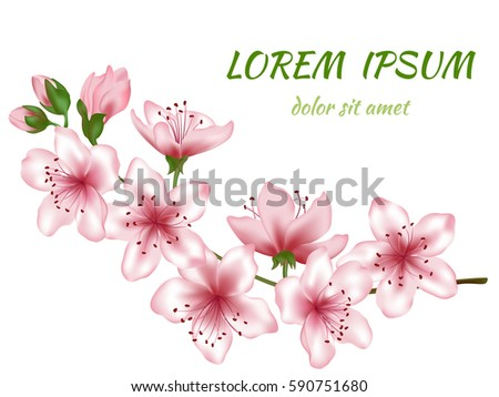 cherry floral background design download free vector art stock