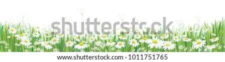 vector  blossoming daisy