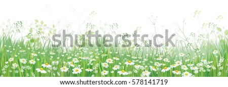 vector  blossoming flowers