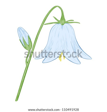 vector blue bell flower isolated on white background