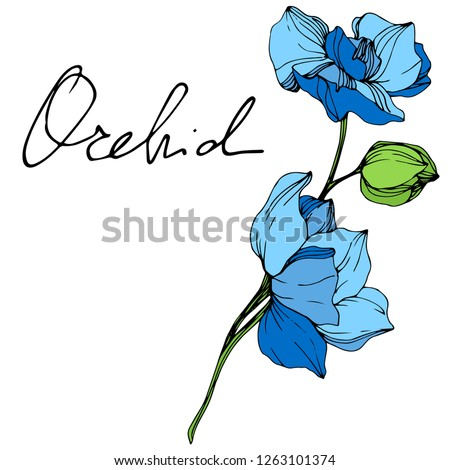 vector blue orchid floral