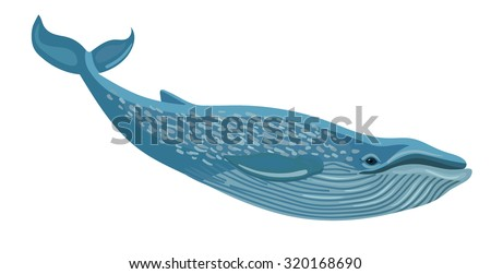 vector blue whale isolated on