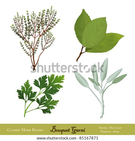 vector - Bouquet Garni. Classic French herb blend for cooking: English Thyme, Bay Leaves, Italian Flat Leaf Parsley, Garden Sage, isolated on white. EPS8 compatible.