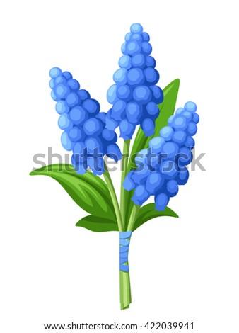 vector bouquet of blue grape