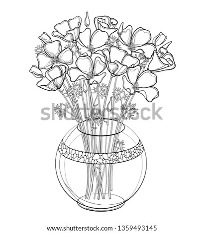 Vector bouquet of outline California poppy flower or California sunlight or Eschscholzia, leaf and bud in black round vase isolated on white background. Contour ornate poppy for summer coloring book.