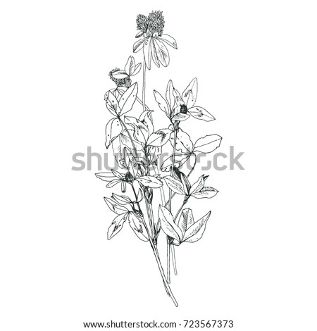 Vector bouquet with drawing wild plants, herbs and flowers, monochrome botanical illustration in vintage style, isolated floral element #723567373
