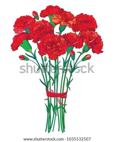 Vector bouquet with outline red Carnation or Clove flower, bud and green leaf isolated on white background. Ornate carnation bunch for greeting spring design. Mother day symbol in contour style.
