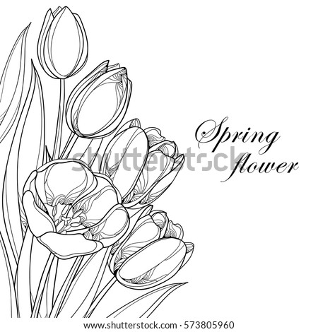 vector bouquet with outline